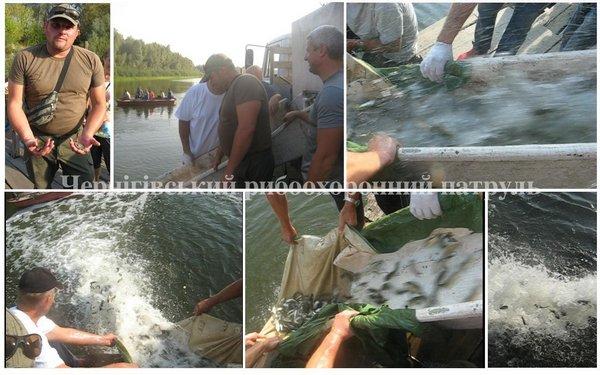 На Чернігівщині до р. Десна випущено більше тонни молоді риб